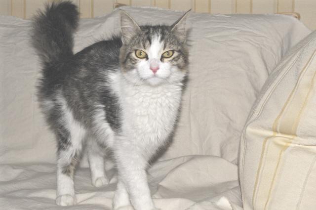 Adottata montecatini gatta giovane con coda super - Gatto solo in casa per 15 giorni ...