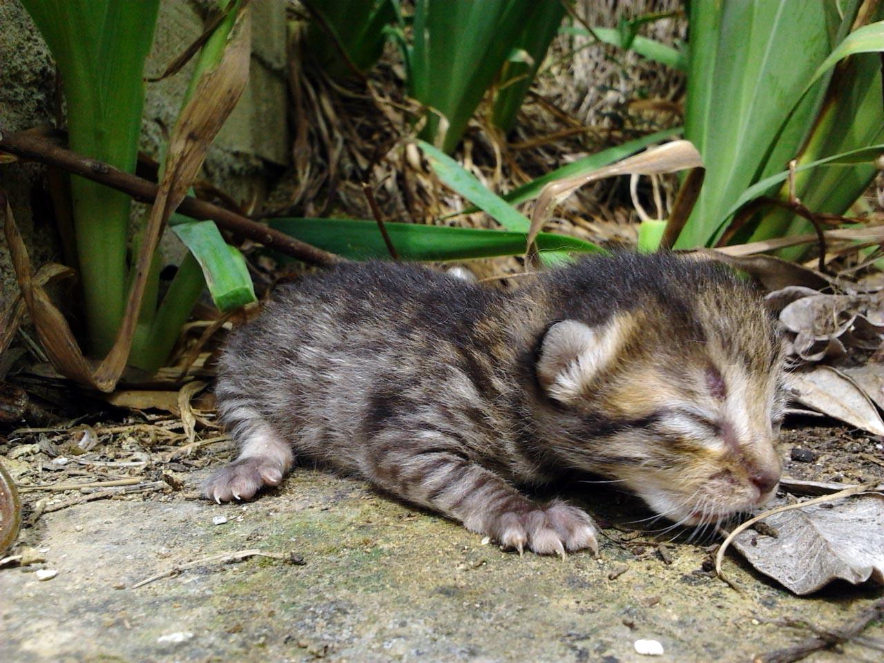 Adozione 7 Gattini Su Firenze Animaliadozionetoscana