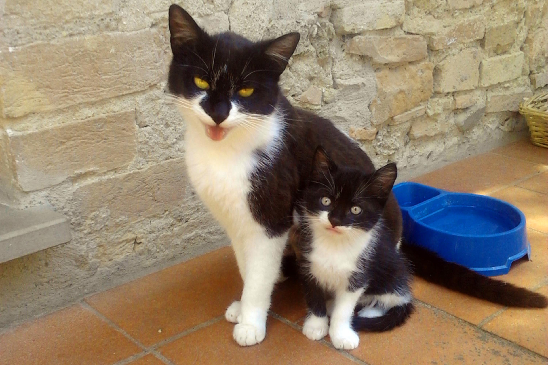 Cucciolo bianco e nero dolcissimo cerca casa. bianconero3