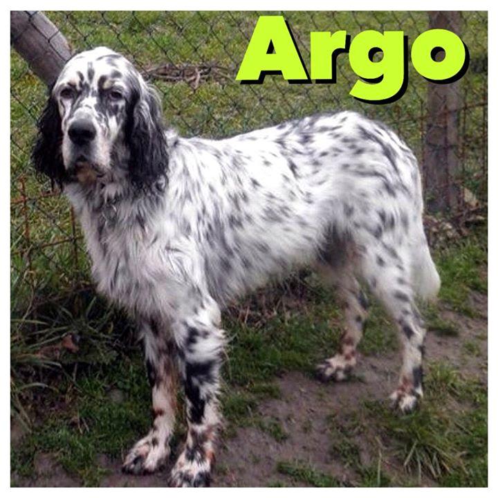 Argo setter inglese da adottare 9 anni e un cuore da for Setter carattere