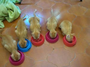 gattini in adozione (1)