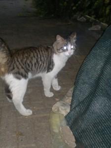 gatto abbandonato2
