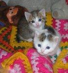 due gattini ermini