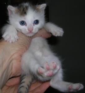 ermini secondo gattino