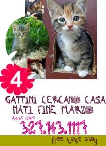 4 gattini