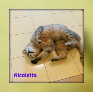 Nicoletta3
