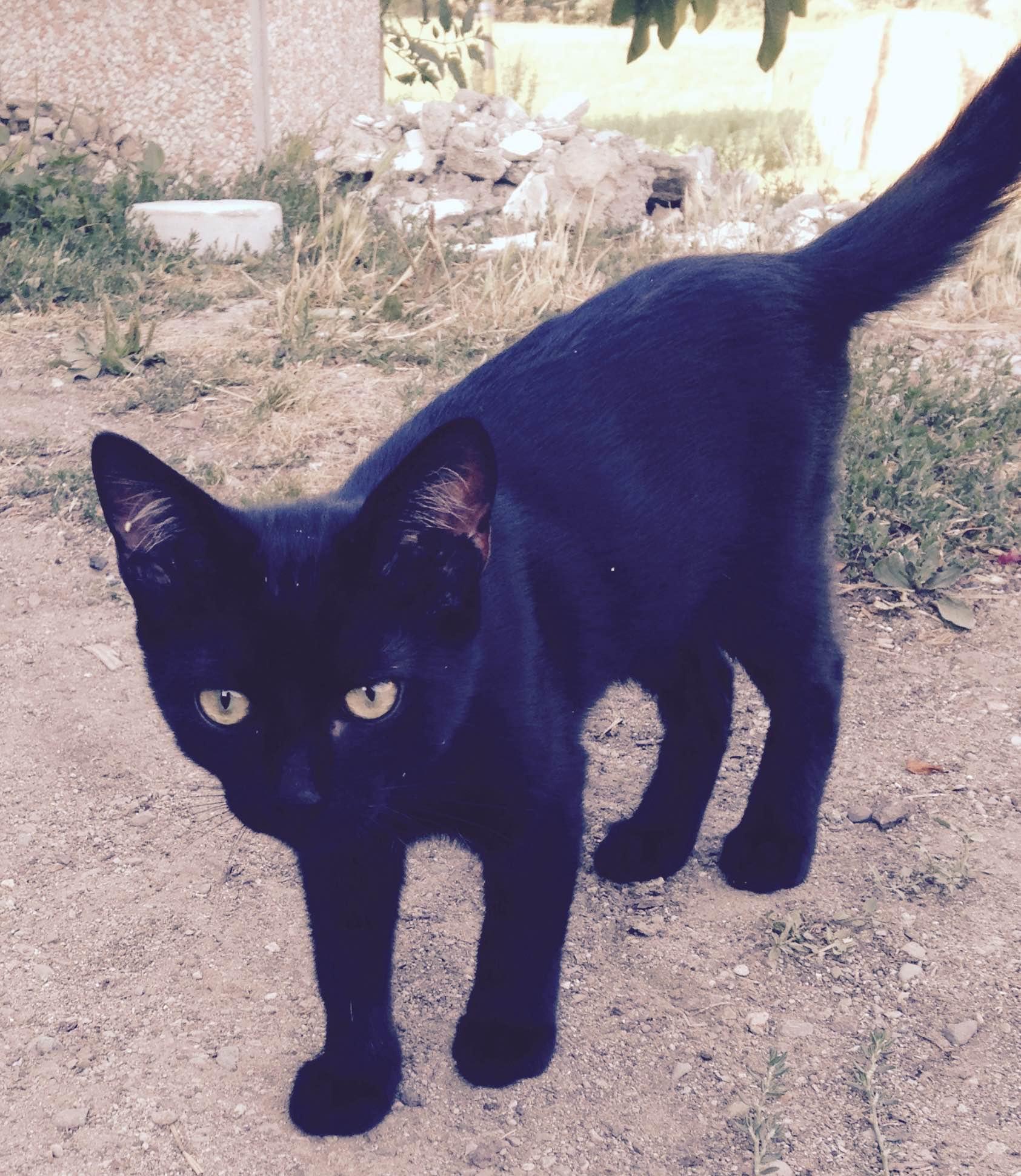 Campi bisenzio 6 gattini cercano casa for Buongiorno con gattini
