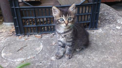 gattine meravigliose 3