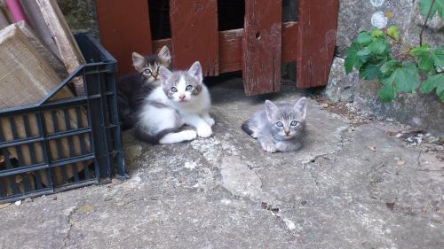 gattine meravigliose
