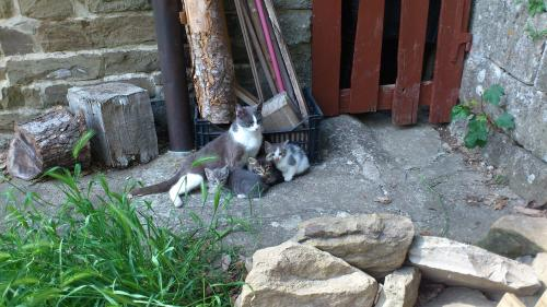 gattine meraviliose e mammina