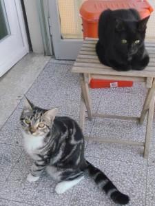 gattine mario 2