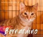 Bernardino2