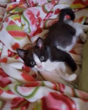 gattino2