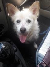 molly in auto