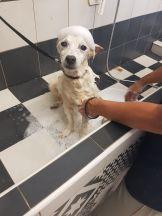 molly si lava